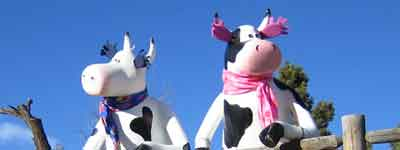 two cows business systems